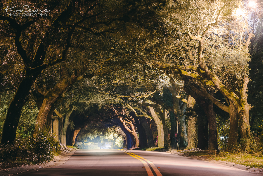 pensacola photogrpaher 12th avenue tree tunnel